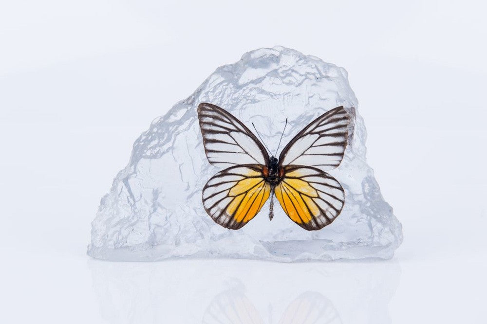 JEZEBEL BUTTERFLY PAPERWEIGHT