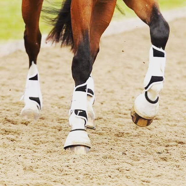 """Stocking up"" horse legs, or swelling of horse legs - why?"