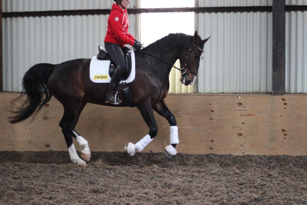 The HUSK. Photo Shoot with Canadian Para Dressage Rider Bert Sheffield