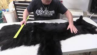 How To Measure A Black Bear For Taxidermy