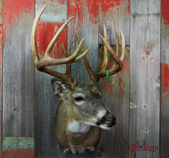 Old Barn Taxidermy - Deer Mount Pictures