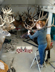 Old Barn Taxidermy Mounting Room - Southeast Iowa