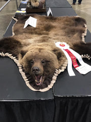 Old Barn Taxidermy Brown Bear Rug - Southeast Iowa