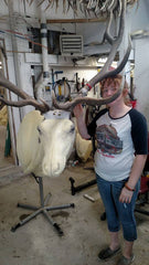 Old Barn Taxidermy Unfinished Elk Mount - Southeast Iowa