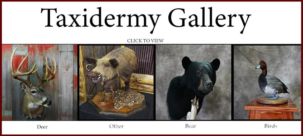 Old Barn Taxidermy - Photo Gallery