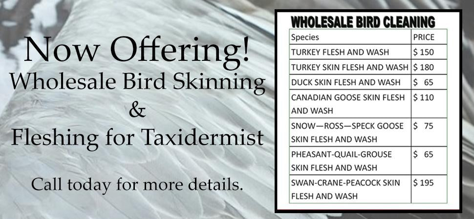 Taxidermy Rugging - Wholesale Rugging