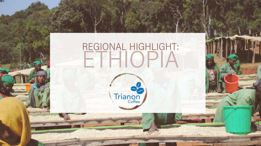Regional Highlight: Ethiopia