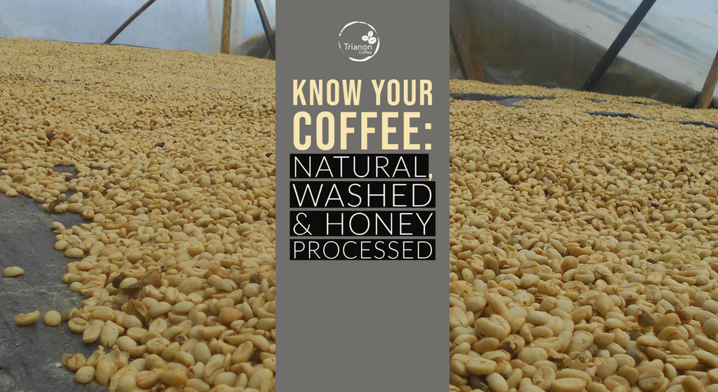 How is honey processed coffee different from washed or natural?
