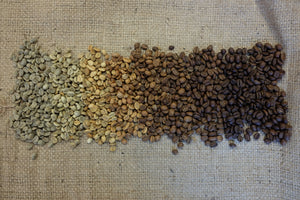 Coffee beans in color scale from green to darkly roasted