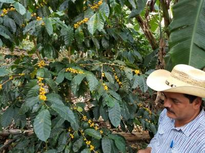 Natural organic Mexico coffee