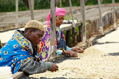 Photo caption: Coffee beans being dried on raised beds at Edelweiss Estate in Tanzania. Photo credit: Royal Coffee.