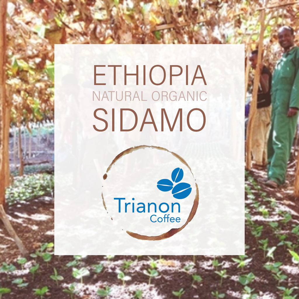 Ethiopia Natural Organic | Locally Roasted in Austin | Fast Shipping