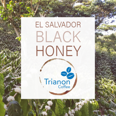 El Salvador Black Honey Coffee Delivery. Premium coffee delivered to your door. Fresh-roasted organic, decaf, and premium coffee. Fast shipping.