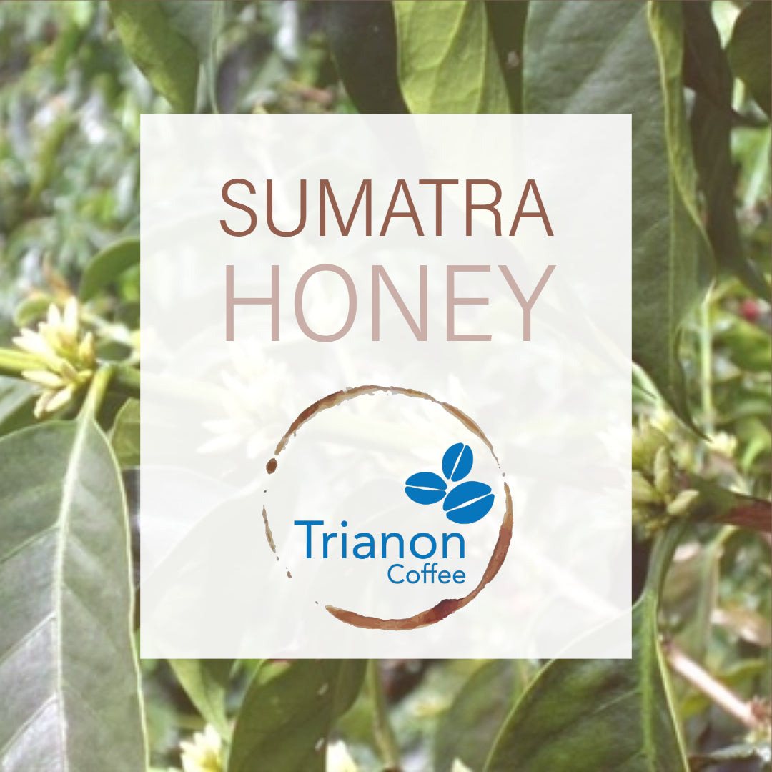 Sumatra Lintong Sipangan Bolon Honey Processed Coffee