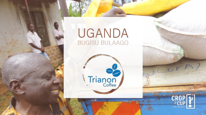 Uganda Bugisu Bulaago Trianon Coffee wide product image