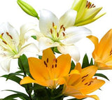 Asiatic Lilies Assorted - BloomsyShop.com