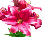Asiatic Lilies Burgundy - BloomsyShop.com