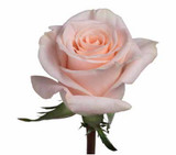 Roses Cream/Peach Lady Jane - BloomsyShop.com