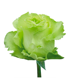 Roses Green Limonada - BloomsyShop.com