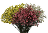 Limonium Assorted - BloomsyShop.com