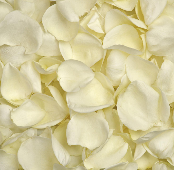 White Rose Petals - BloomsyShop.com