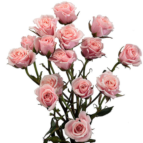Spray Roses Light Pink - BloomsyShop.com