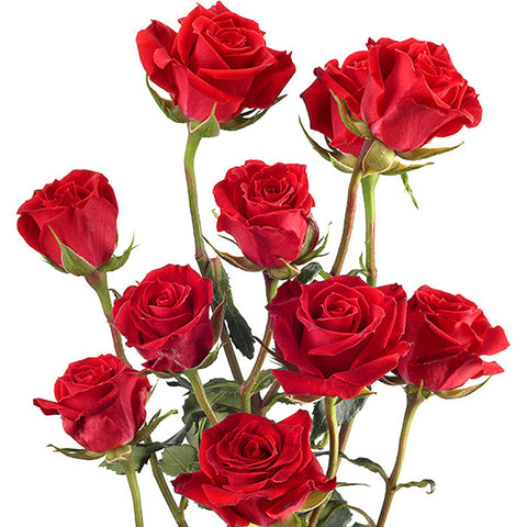 Spray Roses Red - BloomsyShop.com