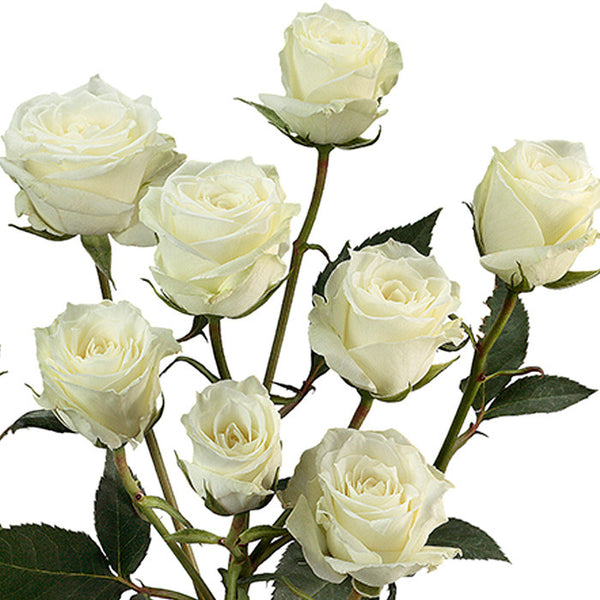 Spray Roses White - BloomsyShop.com
