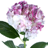 Hydrangea Airbrushed Magenta - BloomsyShop.com