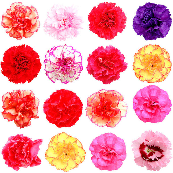 Carnations Assorted - BloomsyShop.com