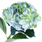 Hydrangea Airbrushed Celeste Green - BloomsyShop.com