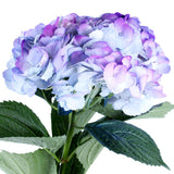 Hydrangea Airbrushed Celeste Lilac - BloomsyShop.com