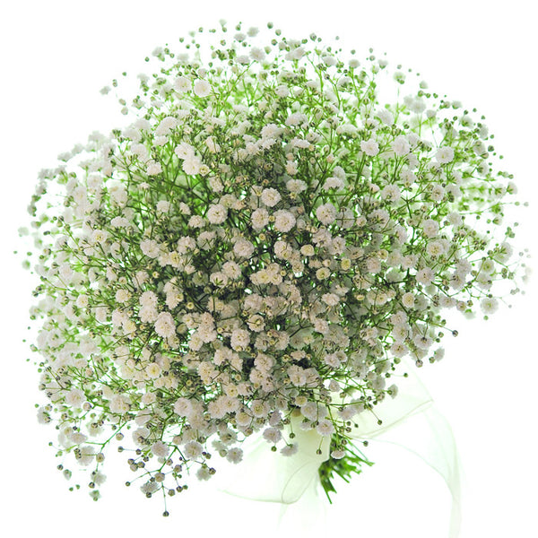 Gyp Million Stars (Baby's Breath) - BloomsyShop.com