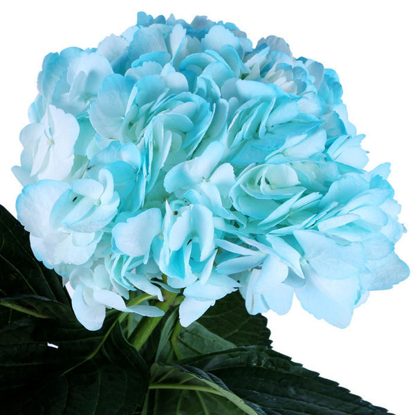 Hydrangea Airbrushed Light Blue - BloomsyShop.com
