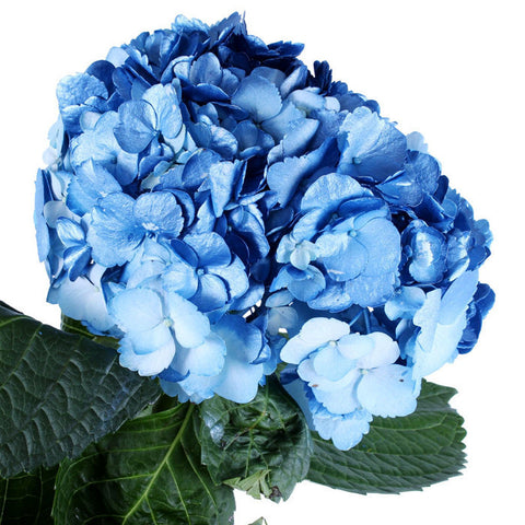 Hydrangea Airbrushed Metallic Blue - BloomsyShop.com