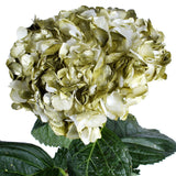 Hydrangea Airbrushed Metallic Green - BloomsyShop.com