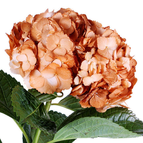 Hydrangea Airbrushed Metallic Orange - BloomsyShop.com