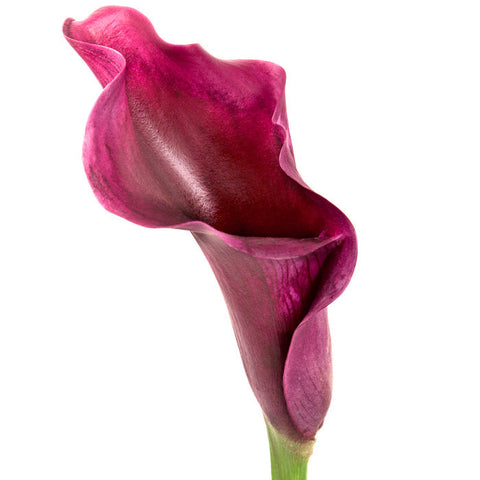 Mini Calla Red/Burgundy - BloomsyShop.com