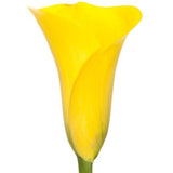 Mini Calla Yellow - BloomsyShop.com