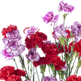 Mini Carnations Assorted - BloomsyShop.com