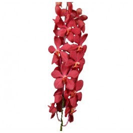 Orchids Mokara Red - BloomsyShop.com
