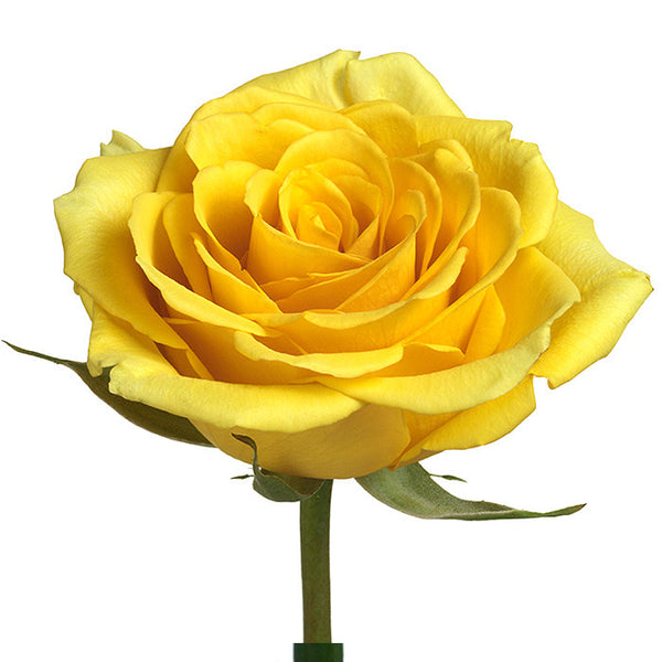 Roses Yellow Gold Strike - BloomsyShop.com