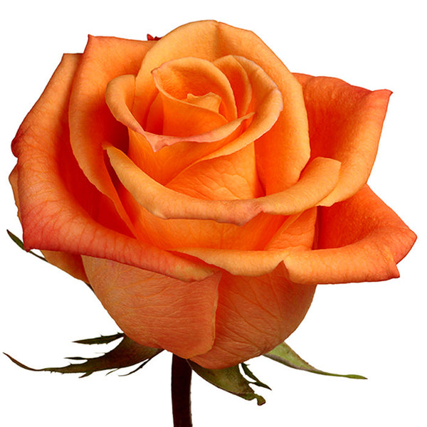 Roses Orange Orange Unique - BloomsyShop.com