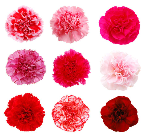 Carnations V-Day Fundraiser Pack - BloomsyShop.com