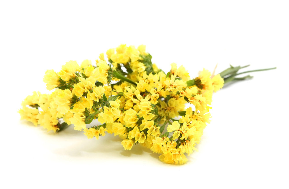 Yellow statice statice in bulk wholesaleflowers statice yellow bloomsyshop mightylinksfo