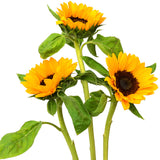 Sunflowers Medium - BloomsyShop.com