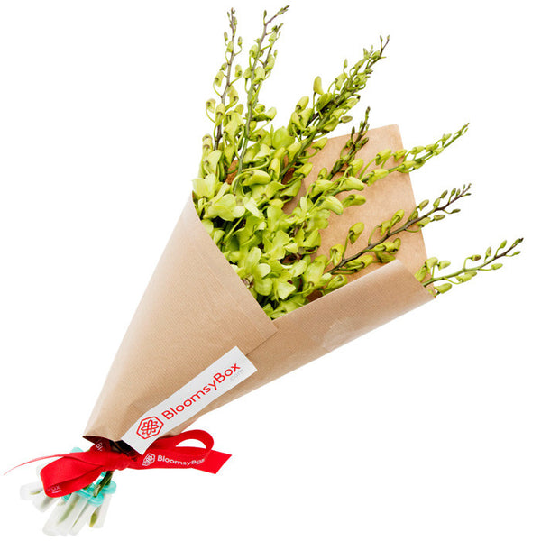 Jubilant (Single Variety Hand-Tied Bouquets) - BloomsyShop.com