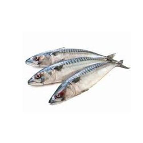 Frozen Fish- Frozen Mackerel