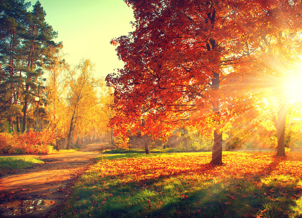 7 Simple Reasons to Enjoy November