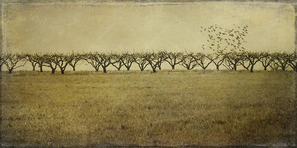 "Flight From the Orchard 60"" x 30"""